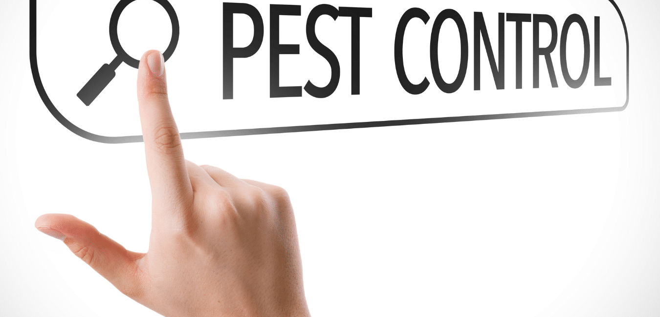 6 questions to ask a pest controller blog